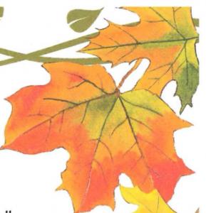 Tastes of Autumn @ Massena Country Club